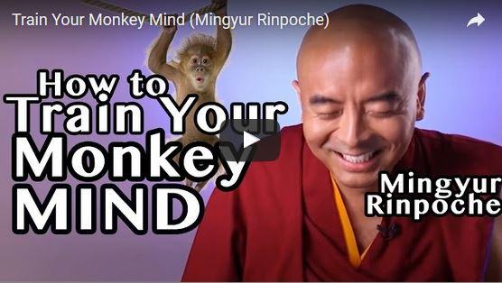 eetgedachten meditatie